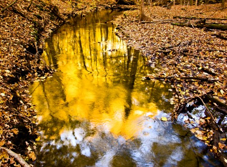 Bos_plas_reflectie_Large